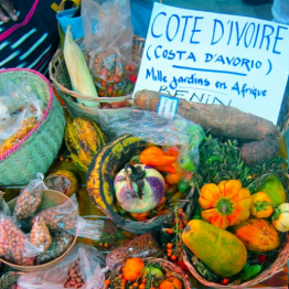 Foto de SLOW FOOD Y SU DÉCIMO TERRA MADRE