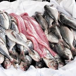 Foto de PARTE 2: TVM FISH SHOPPING CENTER
