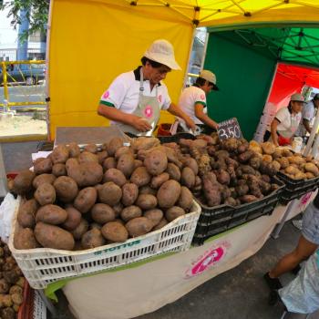Foto de LA AGROFERIA CAMPESINA EN TRES ESPACIOS