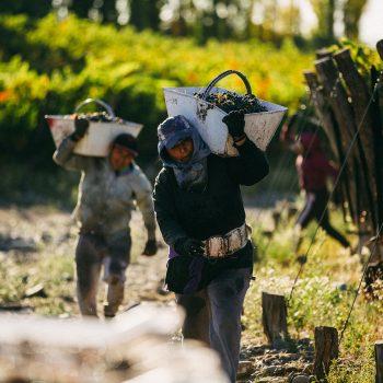 Foto de 2 MALBEC MÁS PARA LA COLECCIÓN: HUENTALA WINES Y EL PODER DE GUALTALLARY