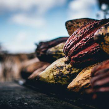 Foto de HOY ANDAMOS RESOLVIENDO DUDAS ¿QUÉ ES EL CHOCOLATE BEAN TO BAR?