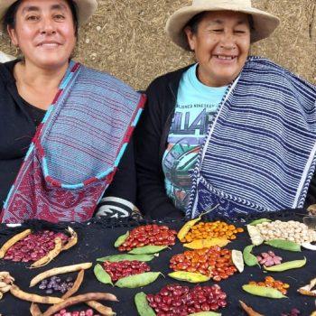 Foto de MARÍA FERNÁNDEZ POQUIS, EL CUIDADO DEL FREJOL Y EL PAJURO AMAZONENSE